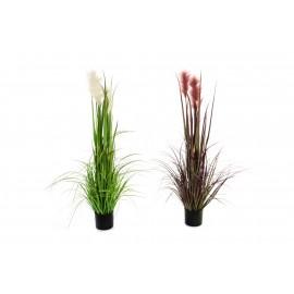 Planta junco 123 cm.
