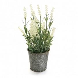 Planta de lavanda blanca