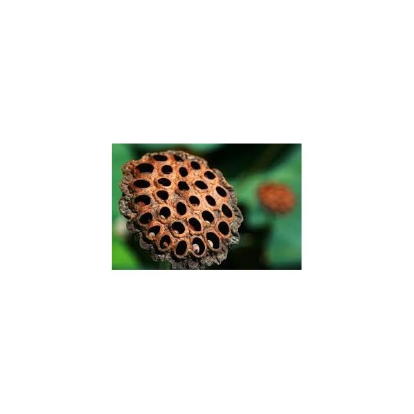 Rama con higos verdes artificial