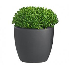 Cactus gris grande
