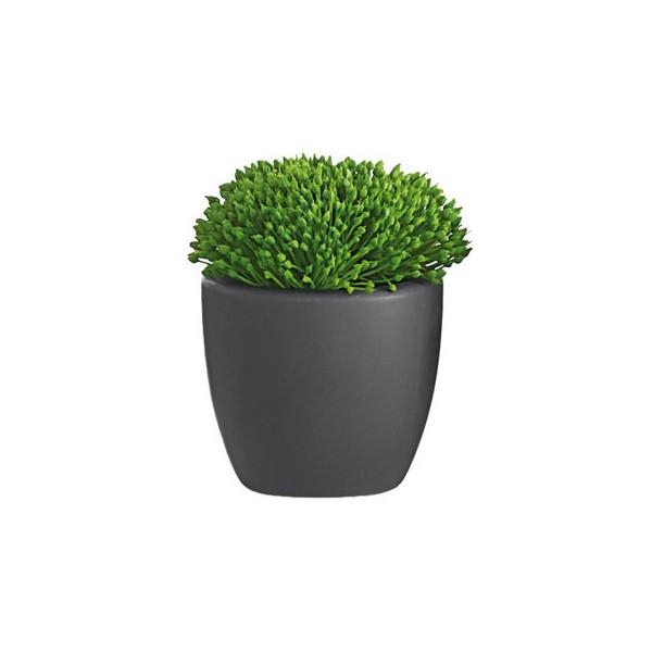 Cactus gris