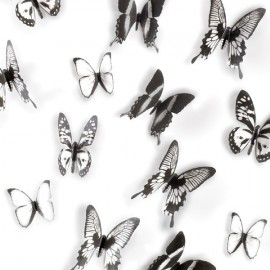 Mariposa Umbra blancas